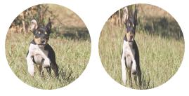 写真ブログ用の無料WordPressテーマ「Spun」のアイキャッチ画像の設定について3